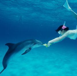 dolphingirl2