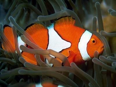 DPSM-Tropical-Fish-ScreenSaver_1