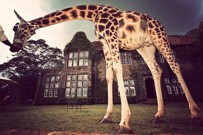 giraffe-manor-1