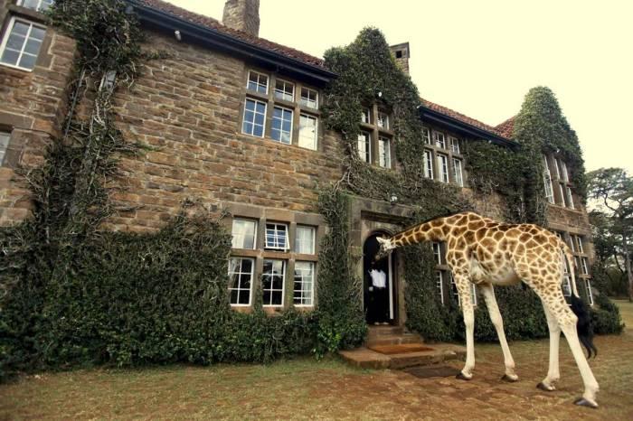 Giraffe-Manor-4