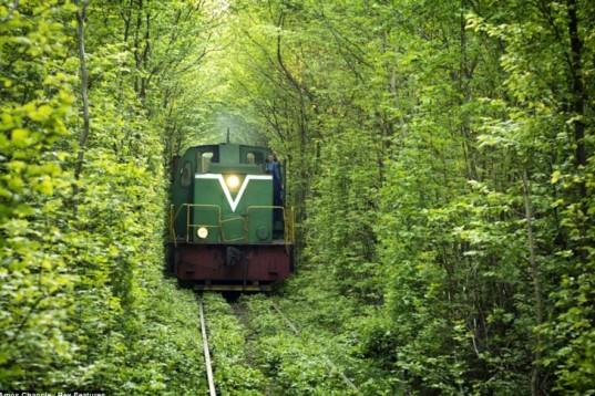 Leafy-Tunnel-Of-Love-In-Ukraine-6-537x358