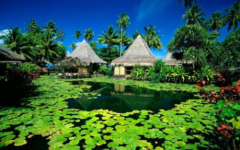 paradise-cool-wallpaper-3-1-s-307x512