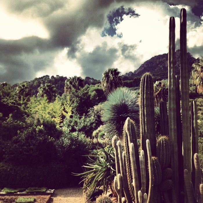 Mallorca - Soller Botanical Garden