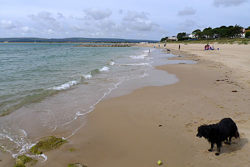 sandbanks-beach-dog