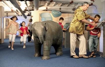 Musée-National-d'Histoire-Naturelle-Galerie-des-Enfants-Mezzanine-Elephant-|-630x405-|-©-MNHN-M.-Voyeux_block_media_big