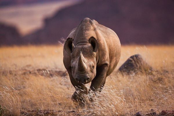 black-rhino-namibia-hunt-club_72851_600x450