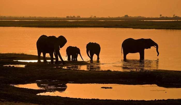 Botswana_Elephants