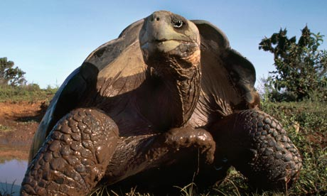Giant-tortoise-numbers-ar-006