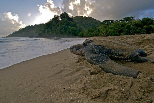 trinidad_leatherback